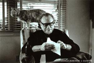 Bukowski-gato